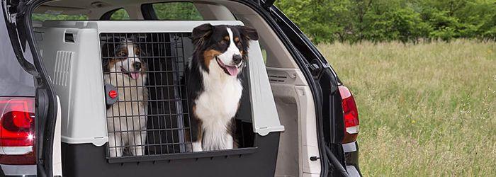 Honden vervoersboxen